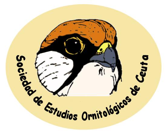 logo SEOCE