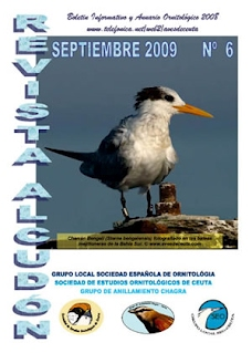 Imagen portada Alcudón 6