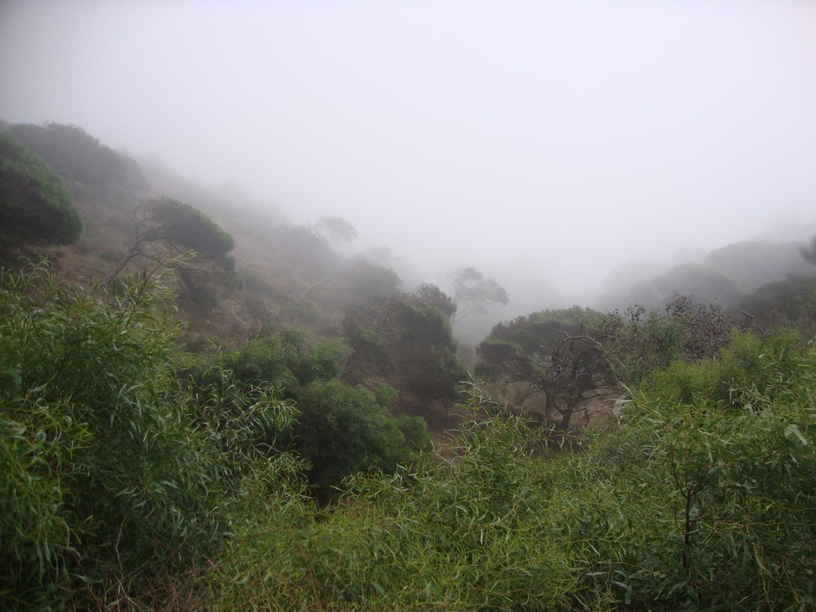 Niebla en el Hacho